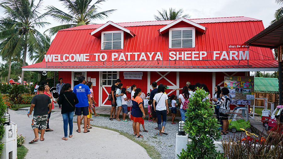 Pattaya Sheep Farm 1