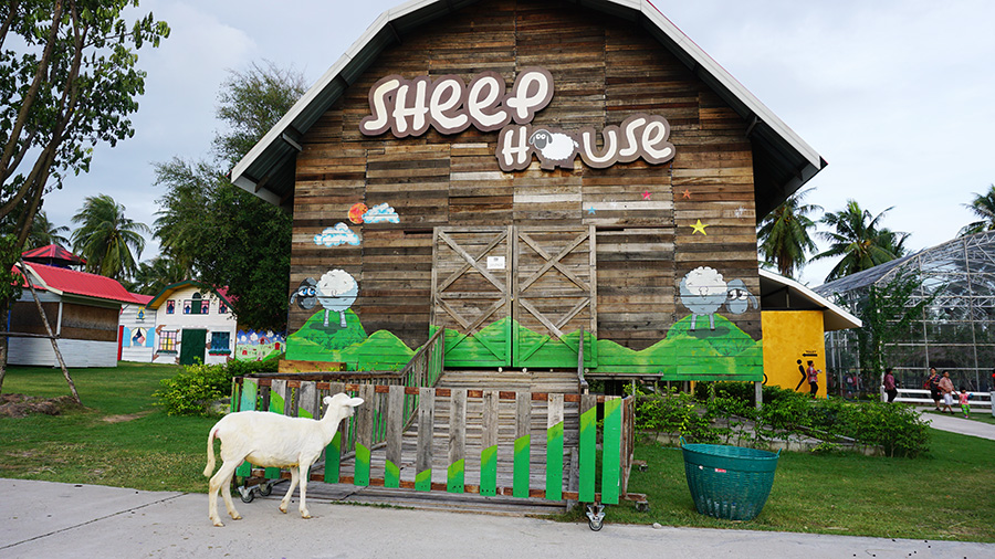 Pattaya Sheep Farm 17