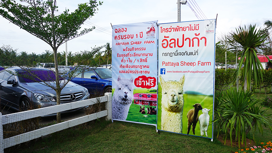 Pattaya Sheep Farm 5