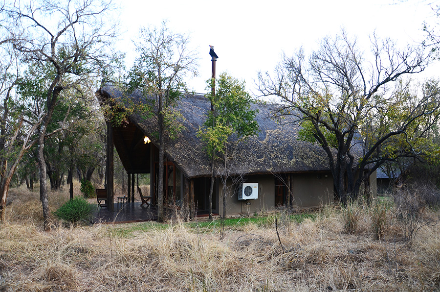 South African Safari and Lodging 13
