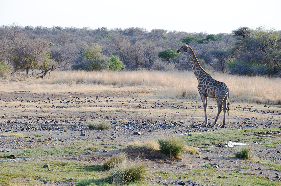 South African Safari and Lodging 22
