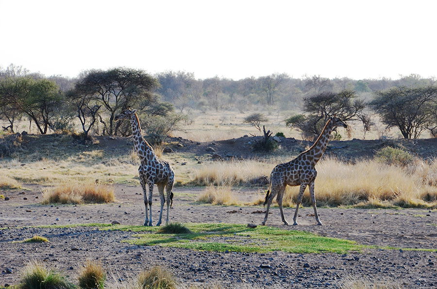 South African Safari and Lodging 23