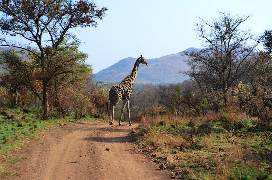 South African Safari and Lodging 27