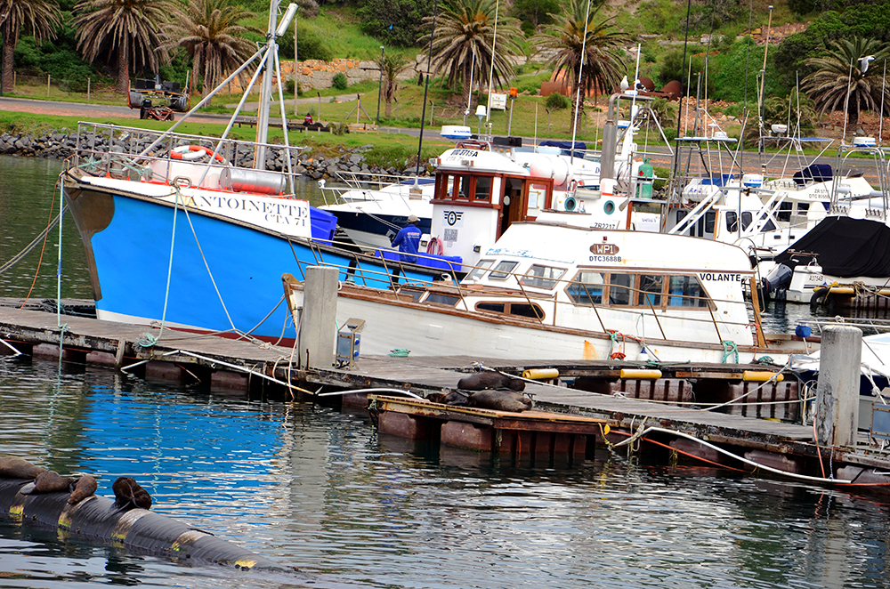 Cape Town South Africa 7