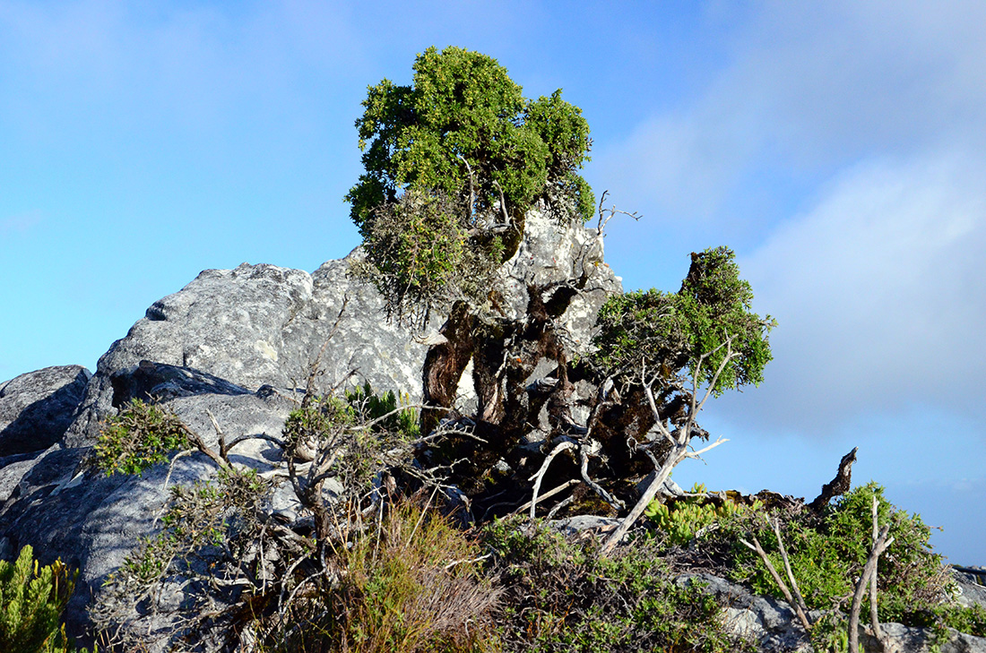 Table Mountain National Park 11