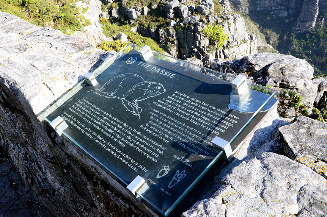 Table Mountain National Park 13