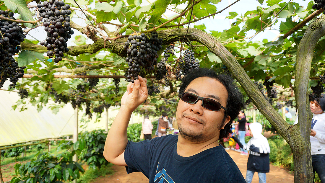 Eden Grape Farm 4