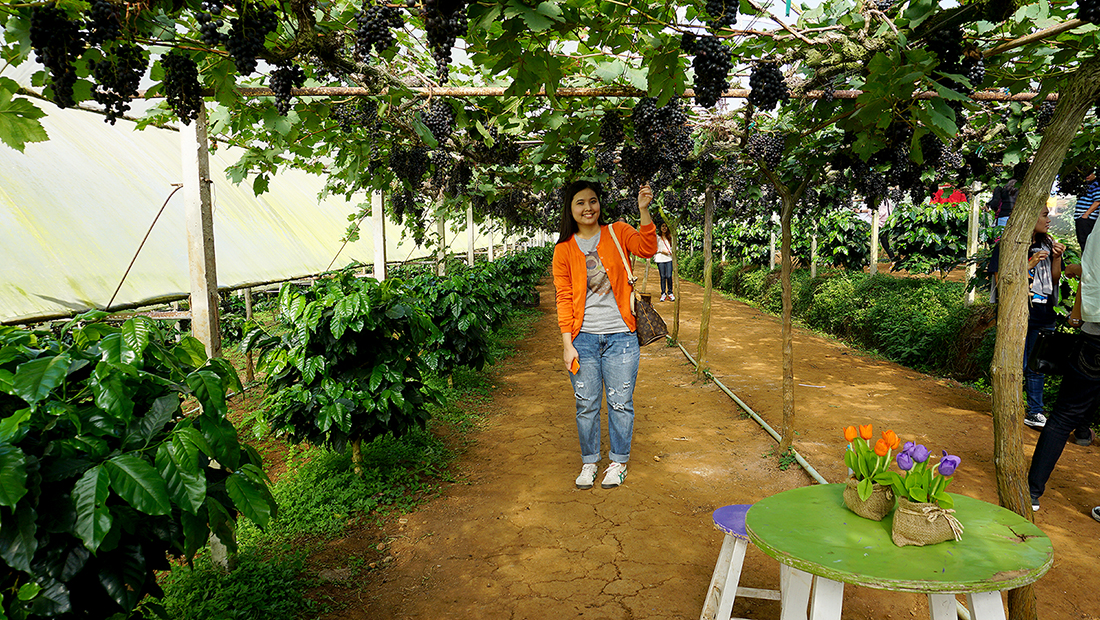 Eden Grape Farm 6