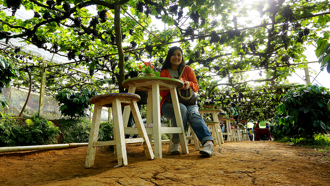 Eden Grape Farm 9