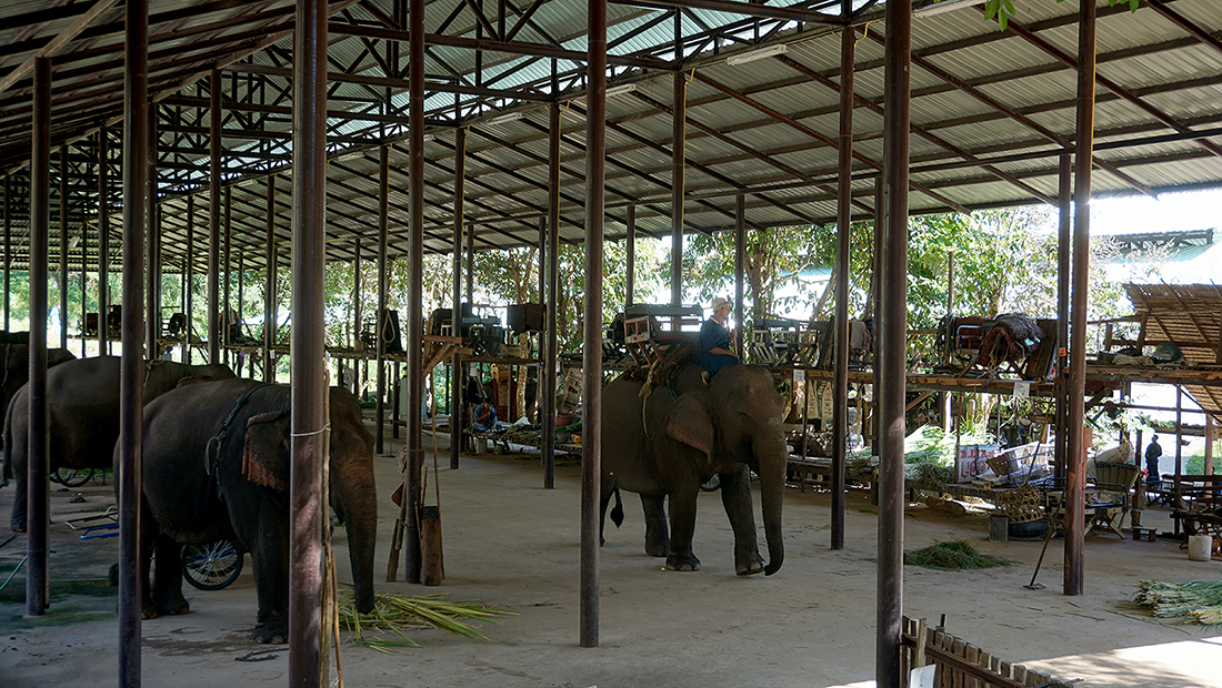 Thai Elephant Conservation Center 11