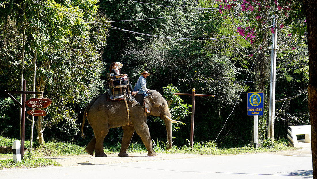 Thai Elephant Conservation Center 29