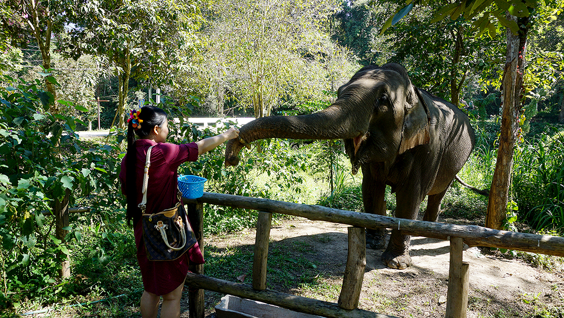 Thai Elephant Conservation Center 33