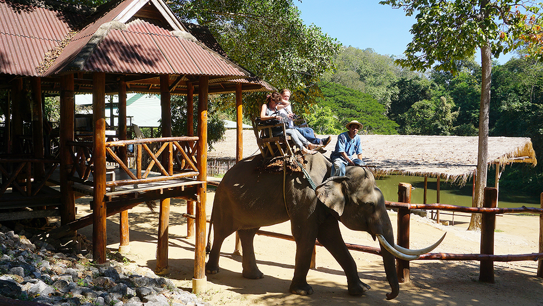 Thai Elephant Conservation Center 8