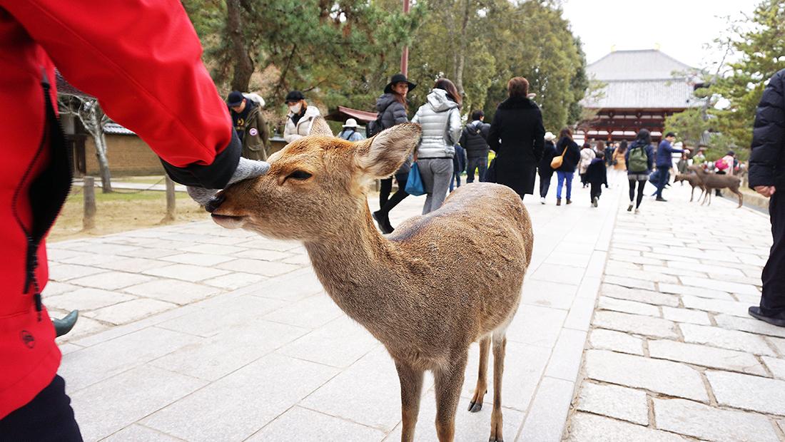 Todai-ji Temple Nara Osaka 32
