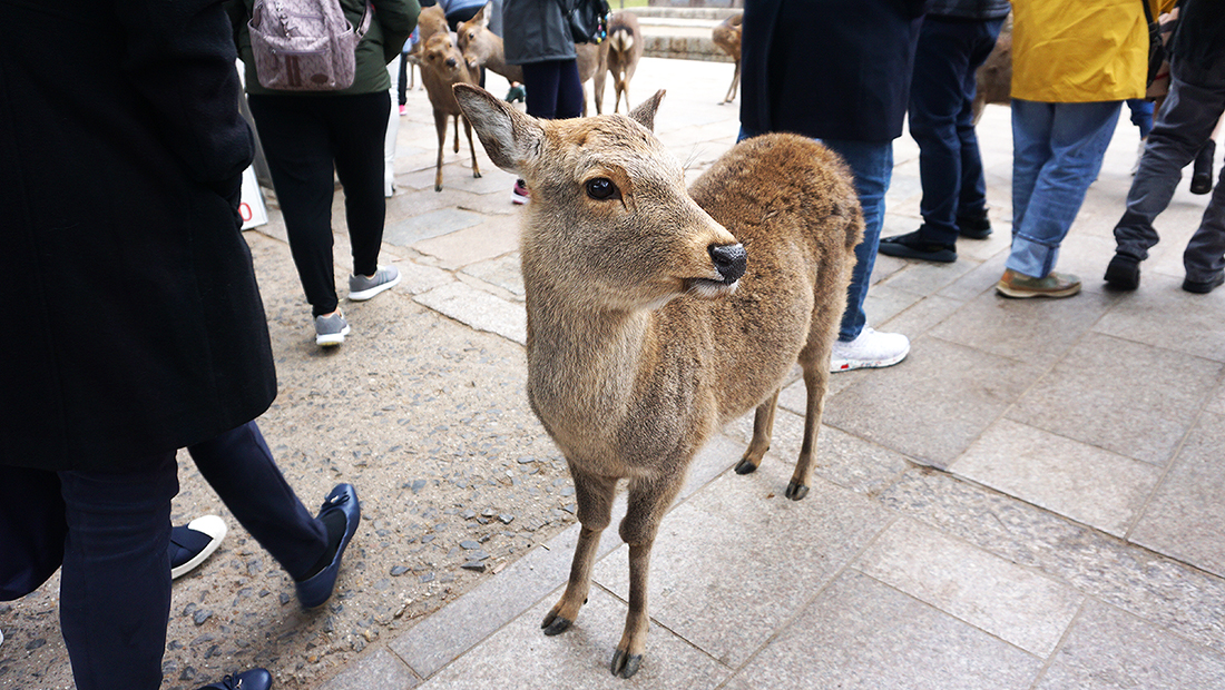 Todai-ji Temple Nara Osaka 4