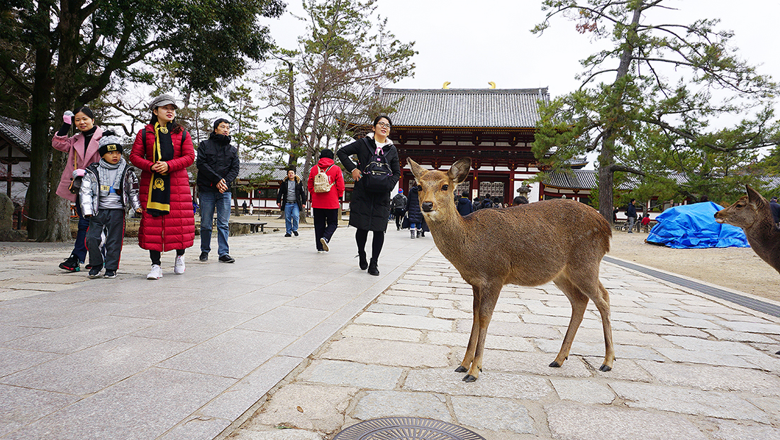 Todai-ji Temple Nara Osaka 5