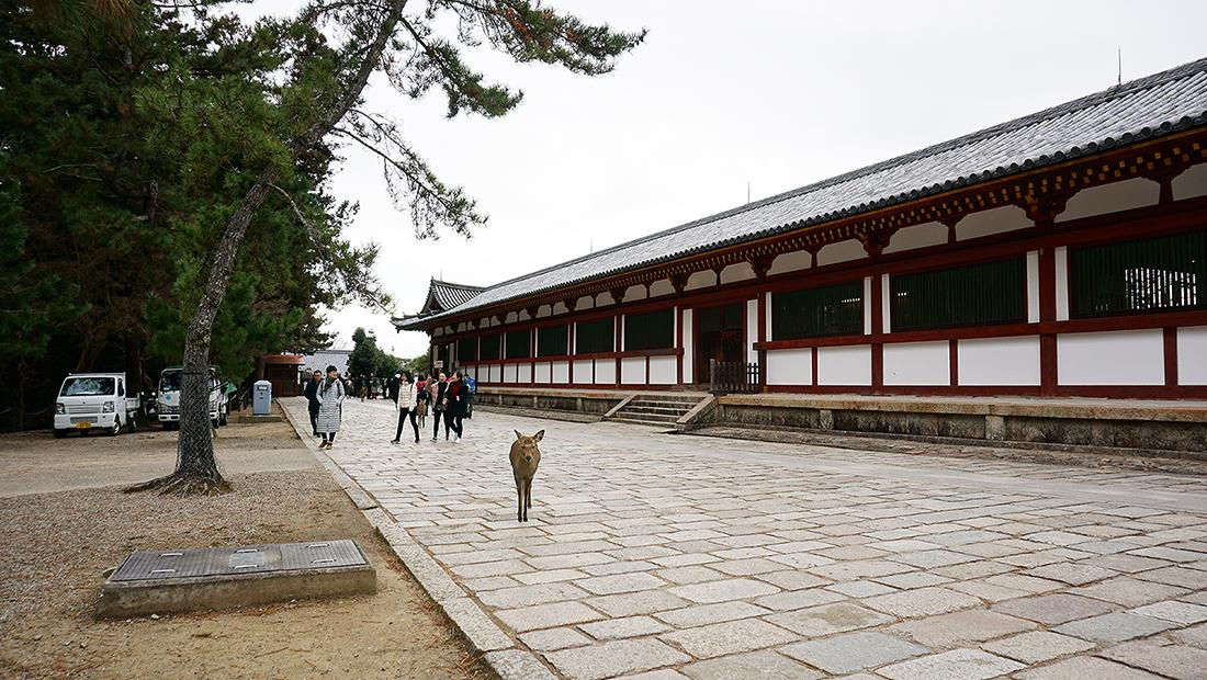 Todai-ji Temple Nara Osaka 7