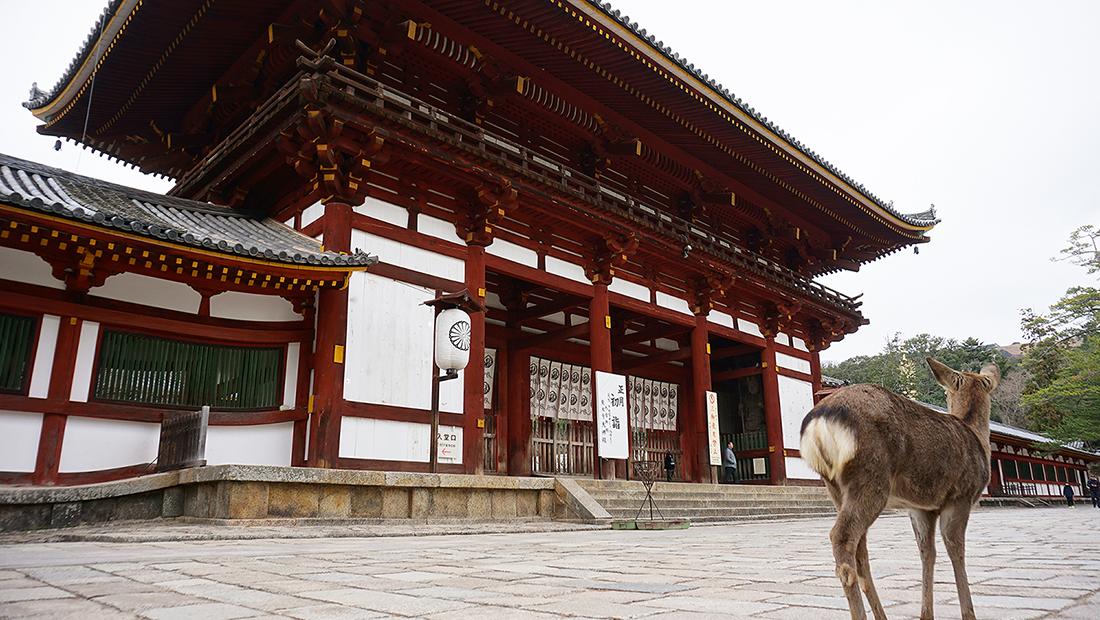 Todai-ji Temple Nara Osaka 8