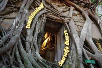 ไหว้พระทำบุญ ให้อาหารอูฐ โบสถ์ปรกโพธิ์ พระอุโบสถถูกต้นไทรโอบกอด  วัดบางกุ้ง อัมพวา